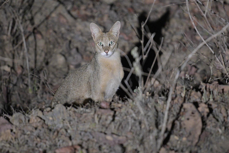 Wildlifesafaris_smallcats_2.jpg