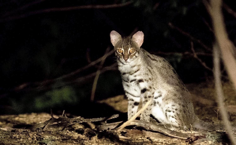 Wildlifesafaris_smallcats_1.jpg