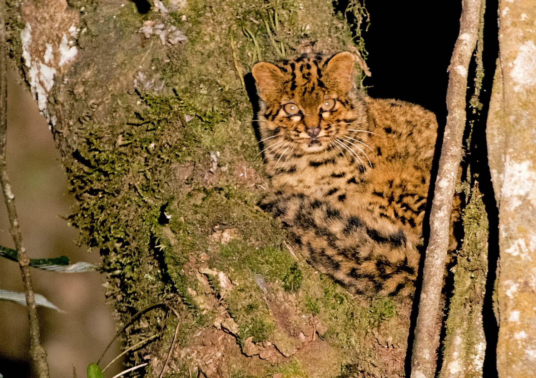 Wildlifesafaris_smallcats_3.jpg