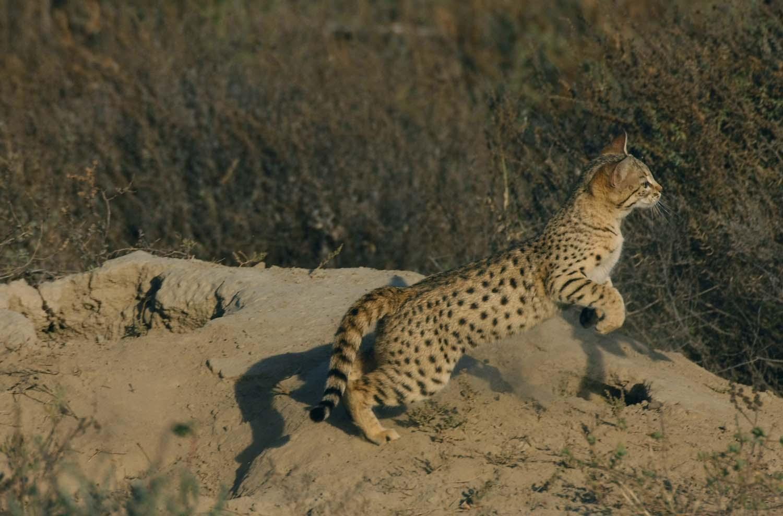 Wildlifesafaris_smallcatsafaris_8.jpg