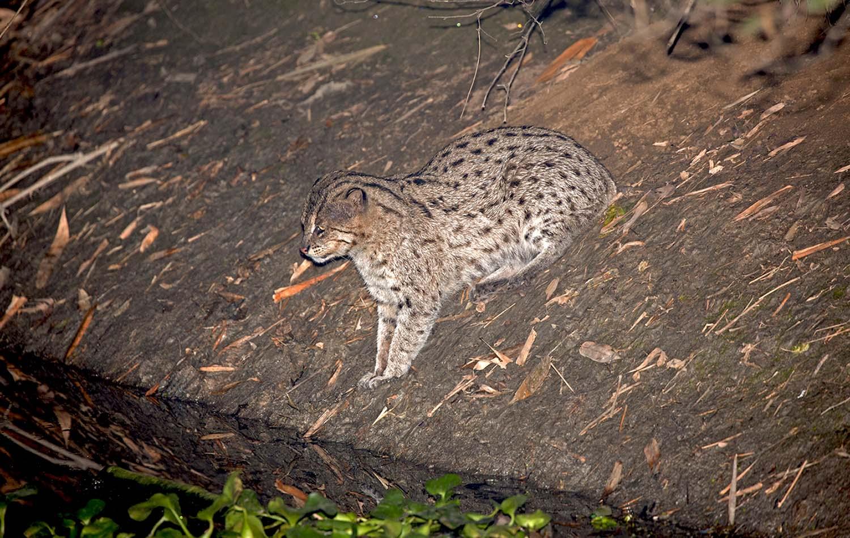 Wildlifesafaris_smallcats_9.jpg