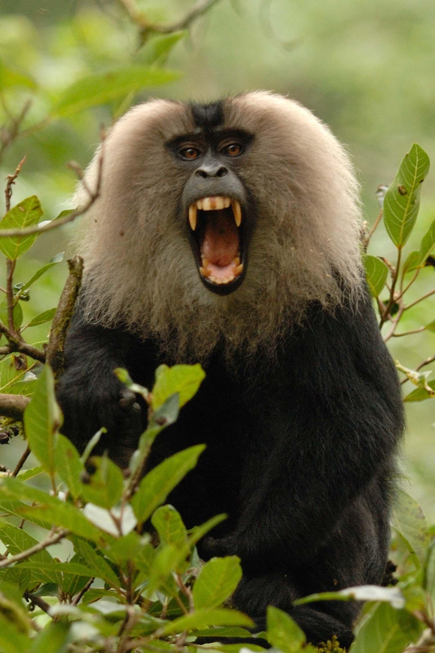 Wildlifesafaris_endemicmammals_3.jpg