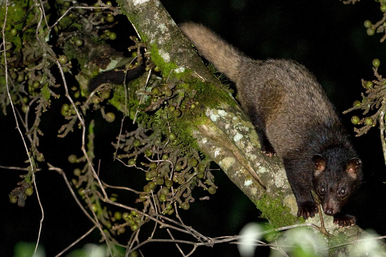Wildlifesafaris_endemicmammals_2.jpg