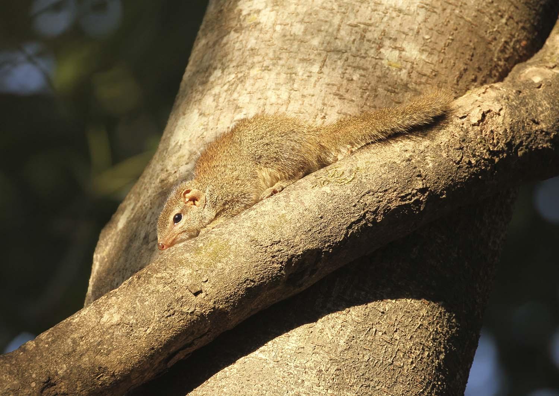 Wildlifesafaris_endemicmammals_4.jpg