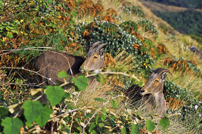 Wildlifesafaris_endemicmammals_5.jpg