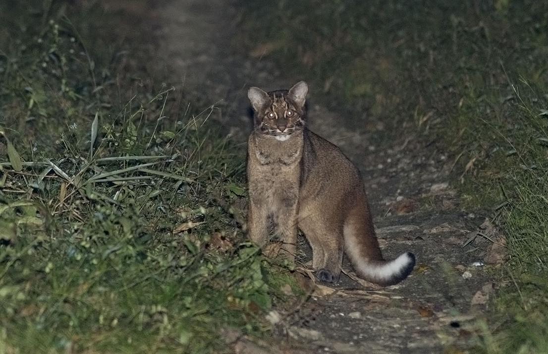Wildlife Safaris_smallcats_1.jpg