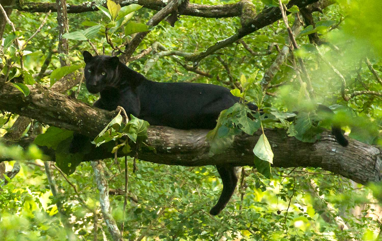 Wildlifesafaris_bigcatsafaris_6.jpg