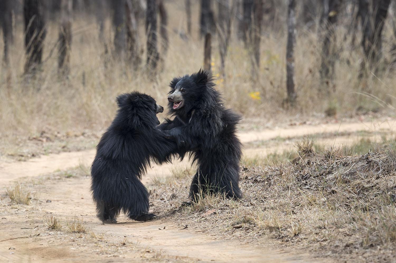 Wildlife Safaris mammalwatching_4.jpg