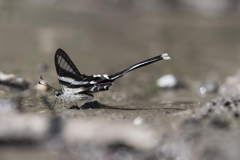 Wilidlife_Butterfly_Pakke_201117.jpg