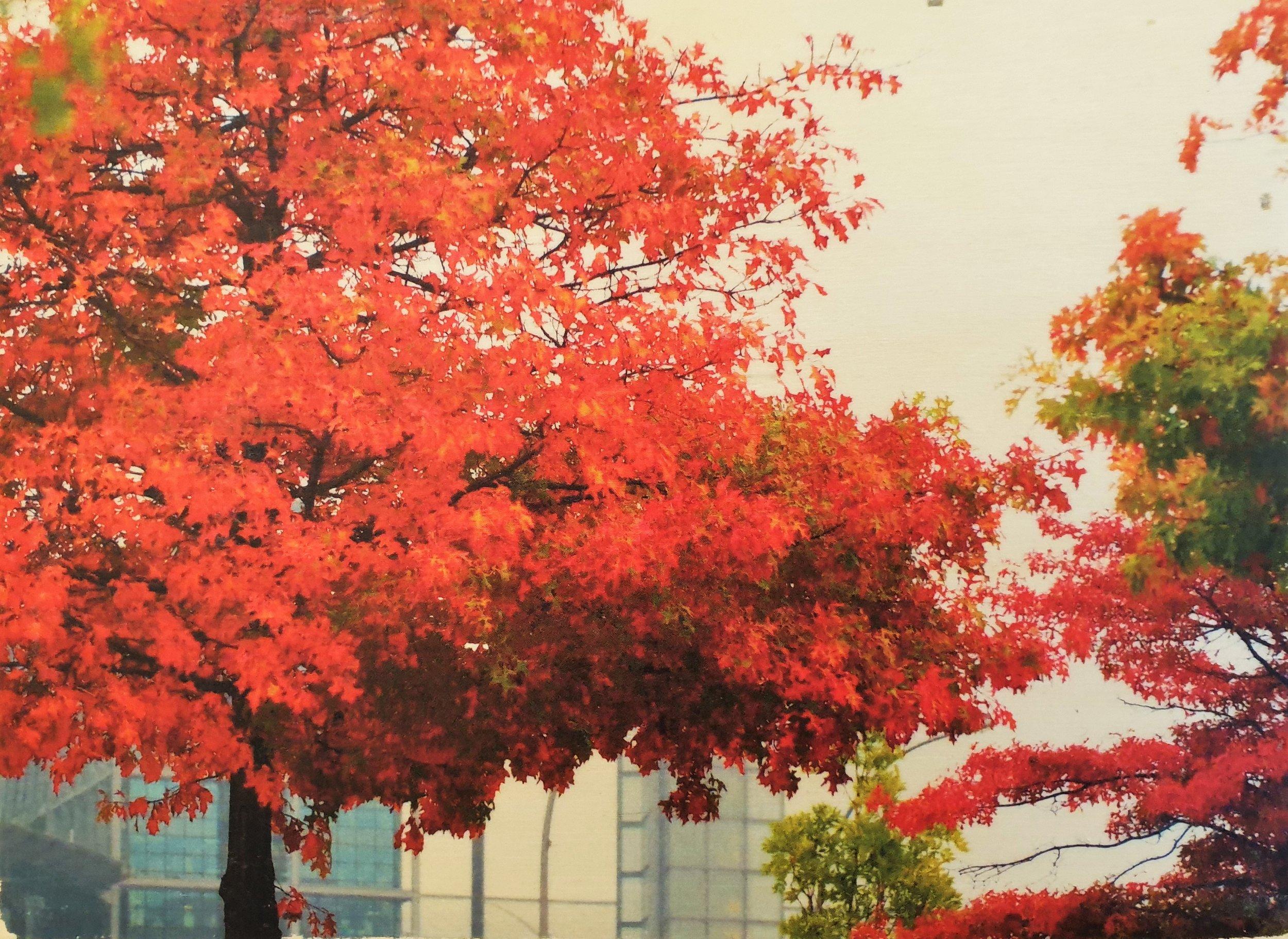 Baum vorm Kanzleramt.jpg