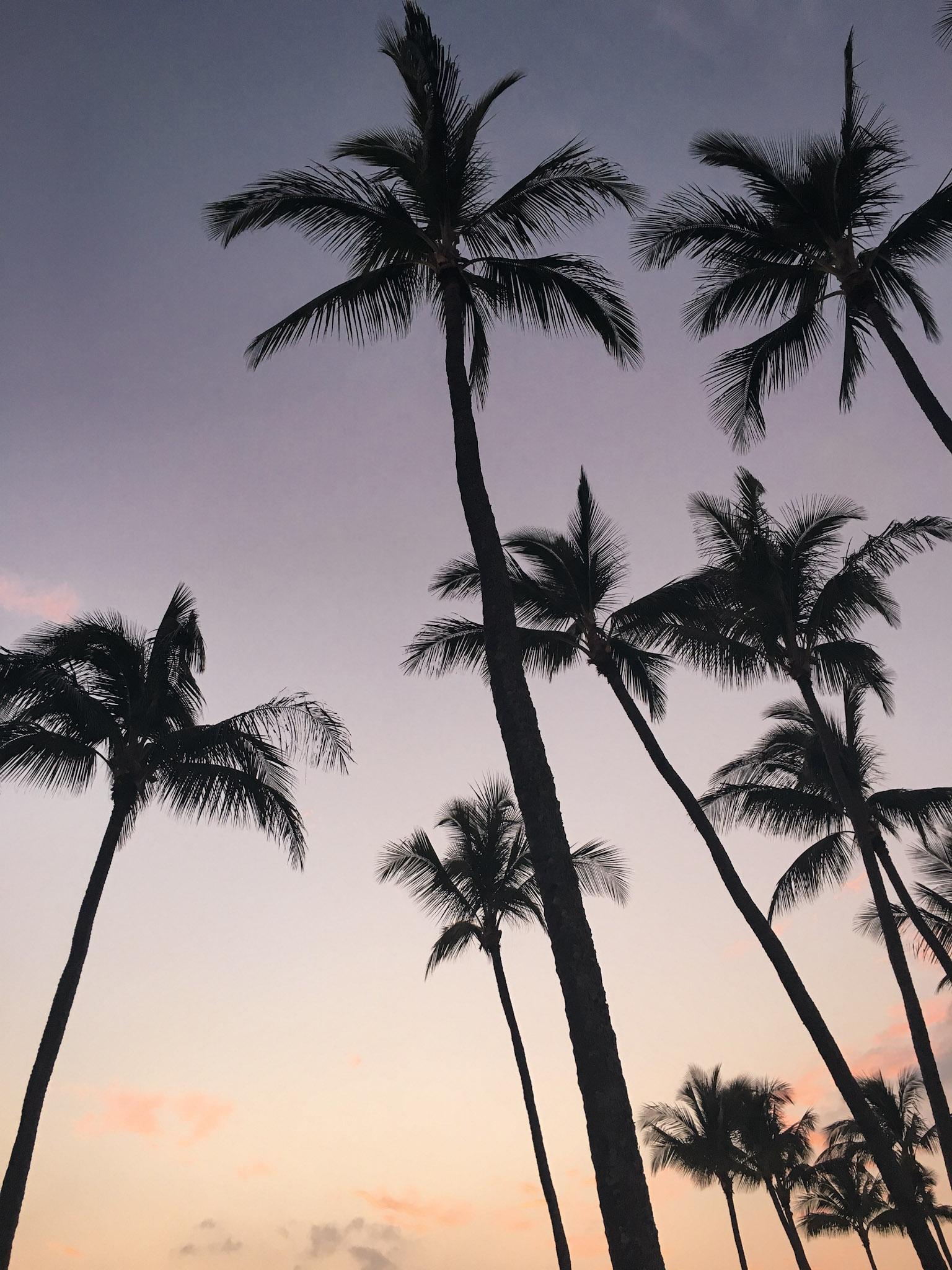 curio.trips.hawaii.palm.sunset.jpg