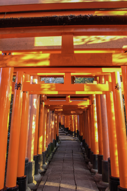 curio.trips.torii.front.jpg