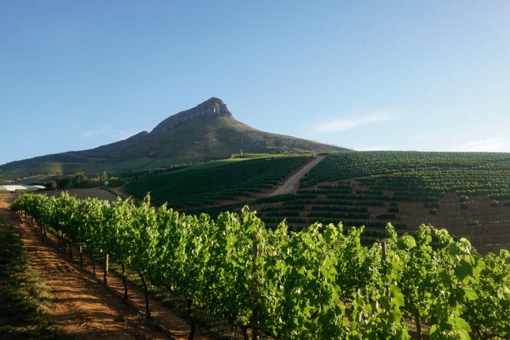 curio.trips.south.africa.franschhoek.vineyard.dusk.landscape.jpg