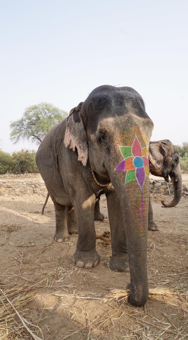 curio.trips.india.jaipur.elephant.pair.jpg