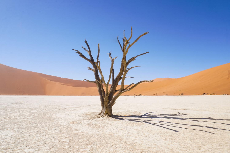 curio.trips.namibia.sossuvlei.deadvlei.solo.tree.jpg