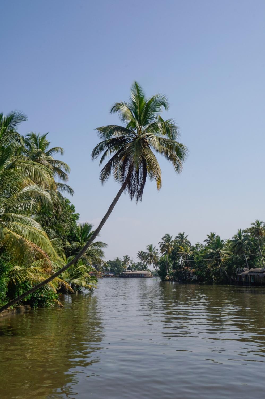 curio.trips.india.kerala.backwaters.palmtree-2.jpg