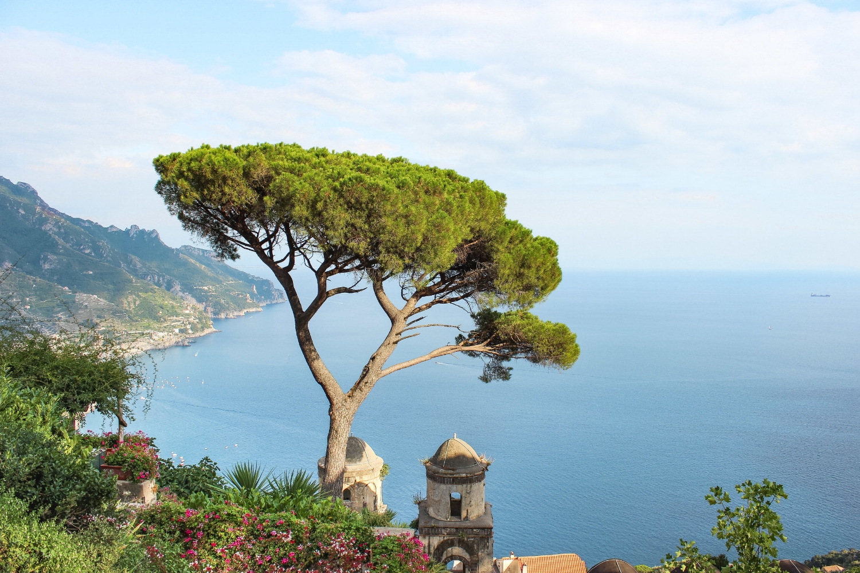 curio.trips.italy.amalfi.coast.ravello.tree.view.jpg