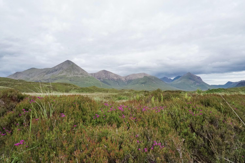 curio.trips.scotland.isle.of.sky.mountains.wildflowers.jpg