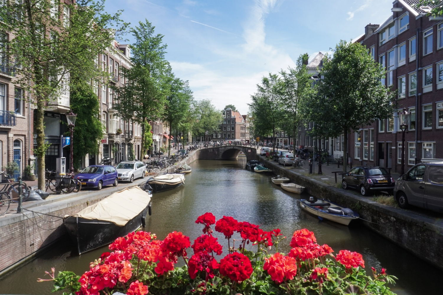 curio.trips.amsterdam.canal.red.flowers.jpg