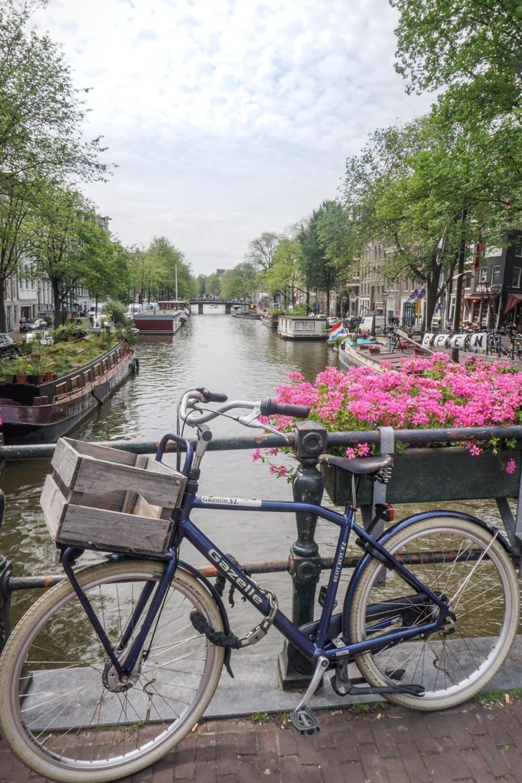 curio.trips.amsterdam.canal.bike.pink.flowers.jpg