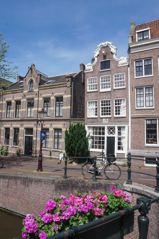 curio.trips.amsterdam.canal.pink.flowers.jpg