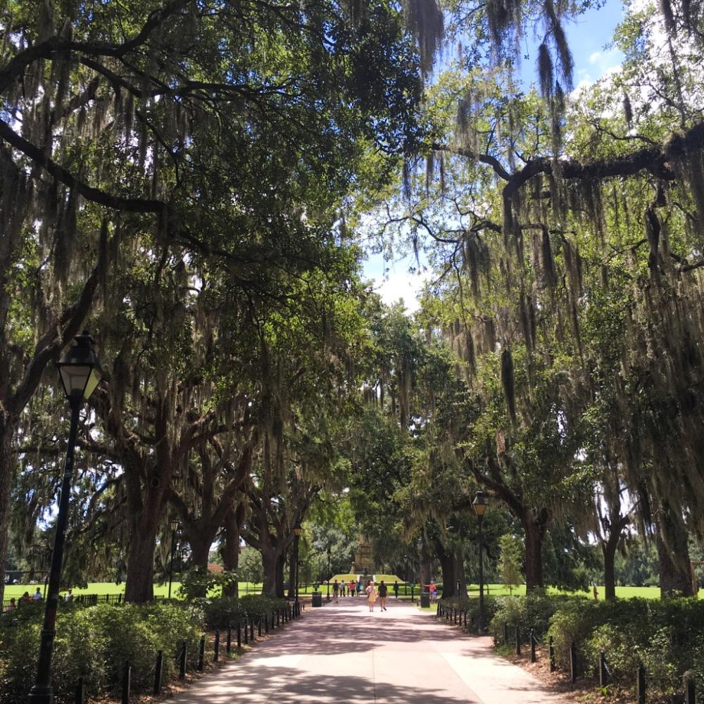 Savannah spanish moss.jpg