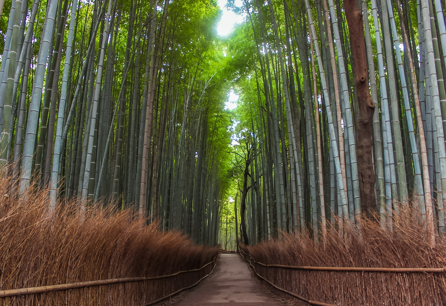 curio.trips.japan.kyoto.bamboo.grove.landscape.jpg