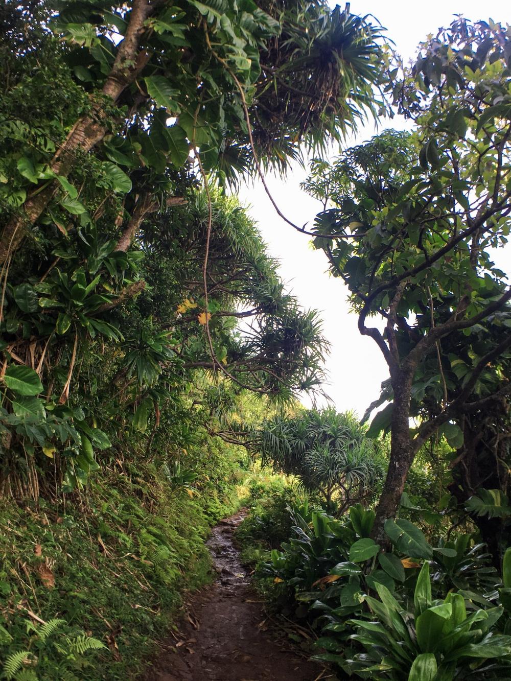 curio.trips.hawaii.kauai.hike.1.jpg