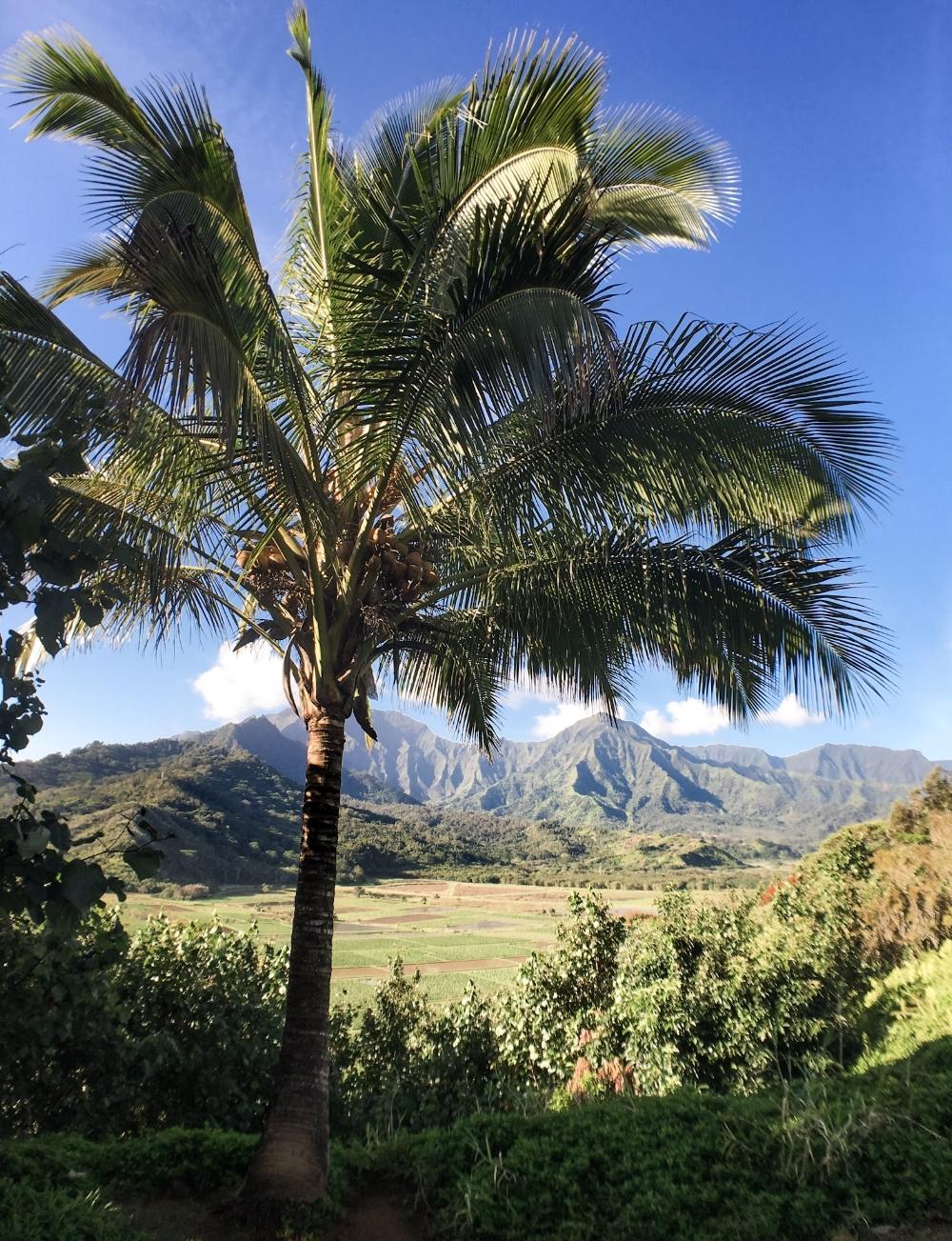 curio.trips.hawaii.kauai.view.jpg