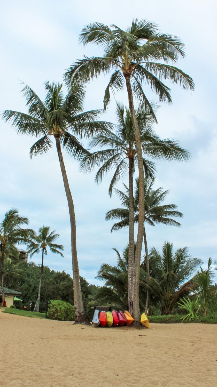 hawaii.kauai.beach(c)curio.trips.jpg