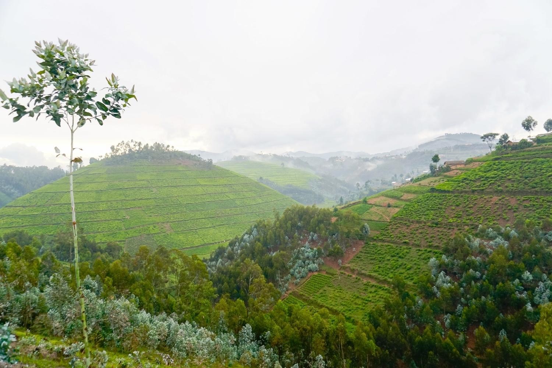 curio.trips.rwanda.nyungwe.np.thousand.hills.view.jpg
