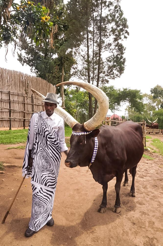 curio.trips.rwanda.cow.horns.jpg