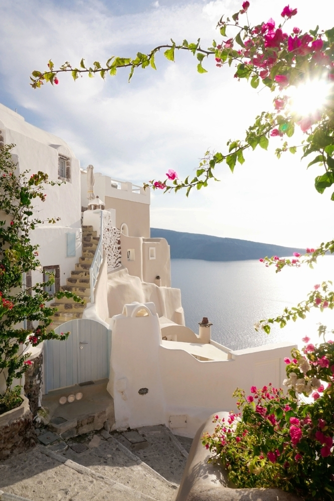 curio.trips.greece.santorini.flower.stairs.sun.portrait.jpg