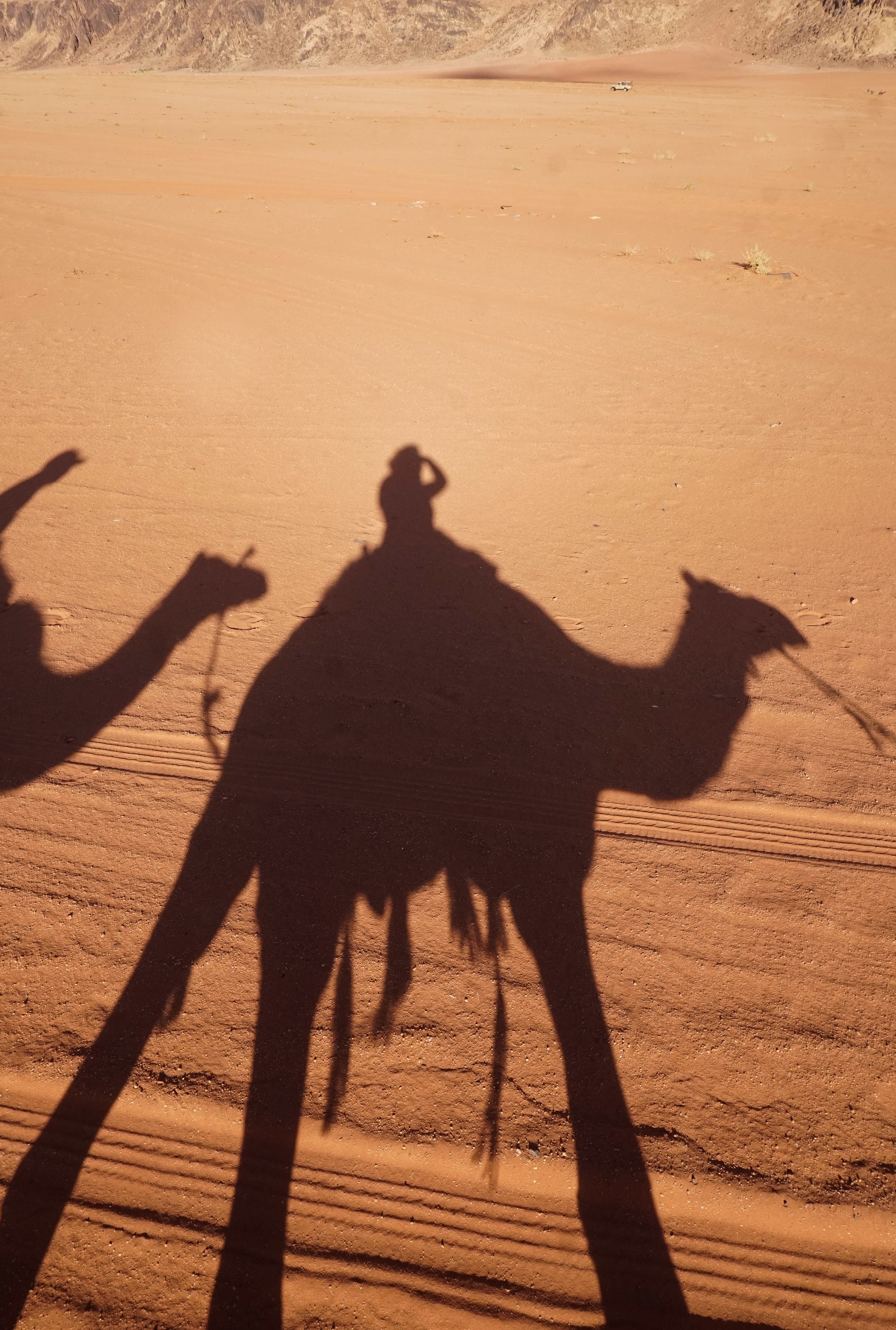 curio.trips.jordan.wadi.rum.camel.shadow.portrait.jpg