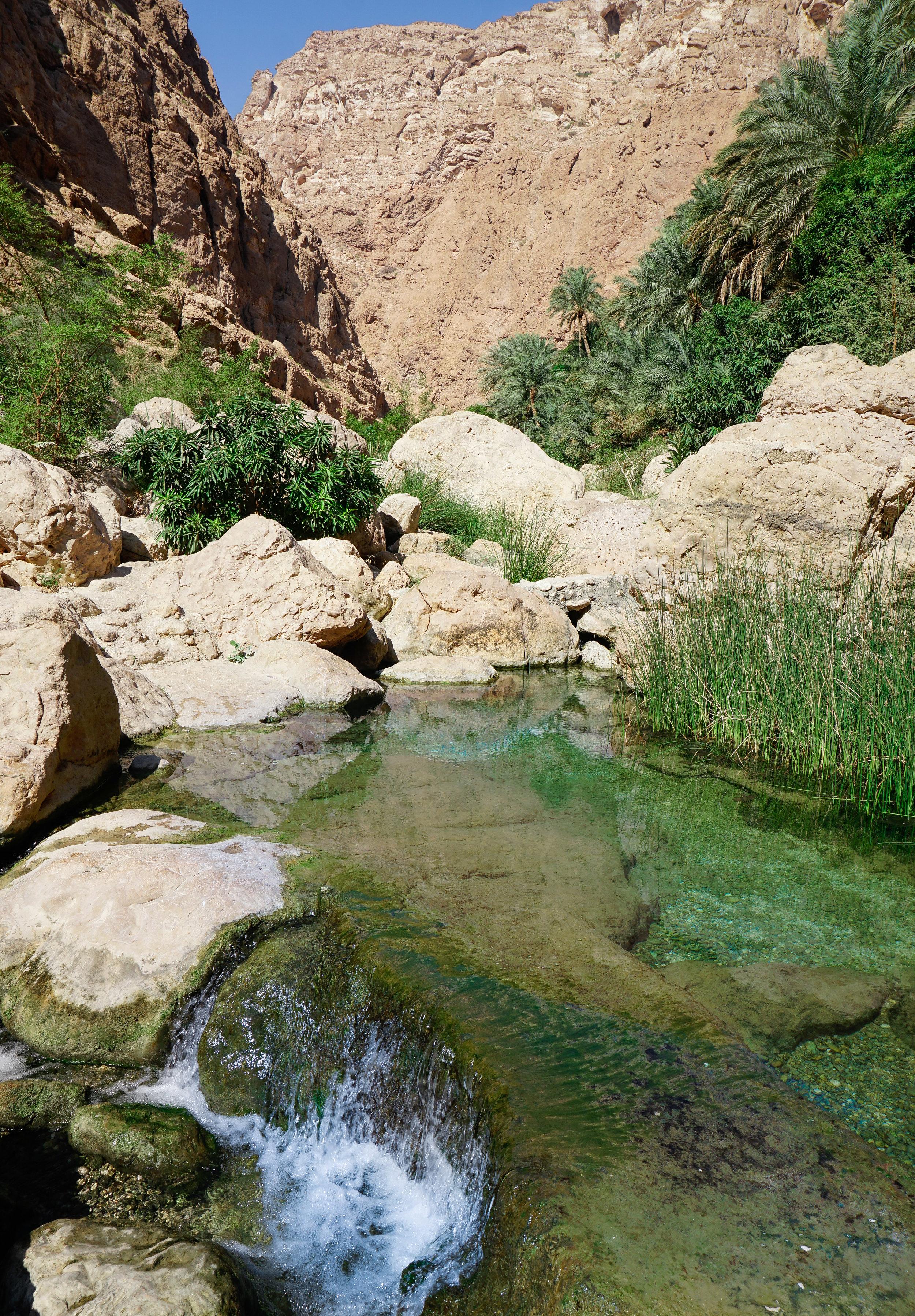 curio.trips.oman.wadi.oasis.palmtrees.water.portrait.jpg