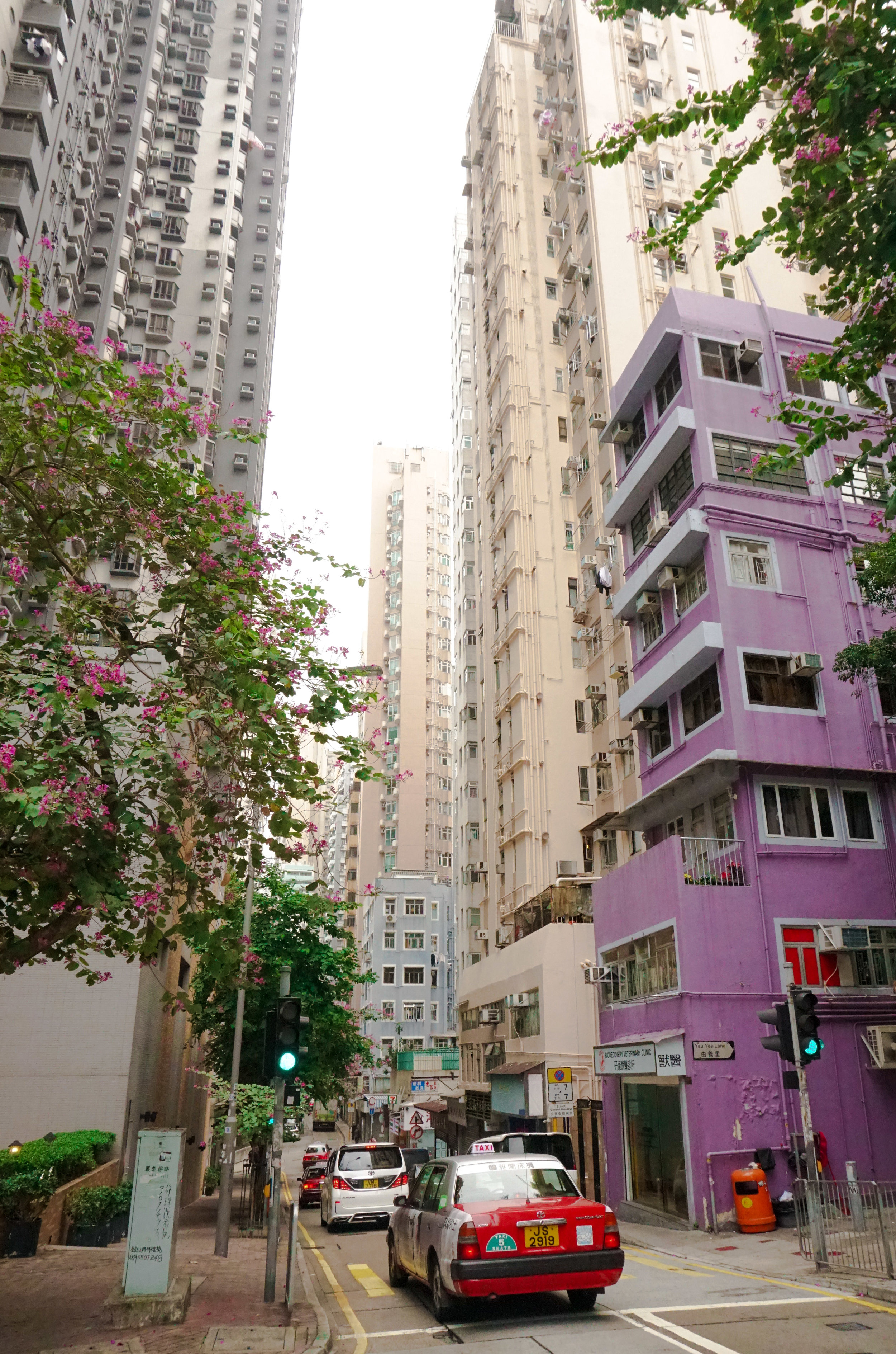 curio.trips.hong.kong.street.taxi.purple.building.pink.flowers.portrait-2.jpg