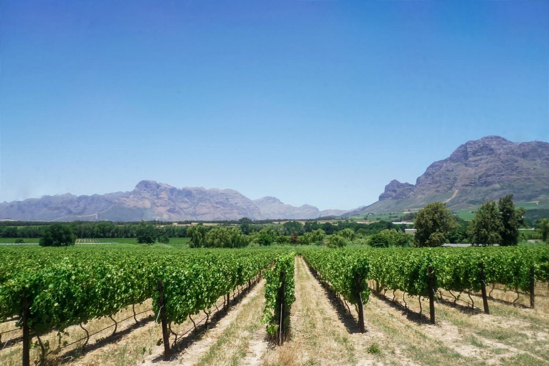 curio.trips.south.africa.franschhoek.vineyard.landscape-2.jpg