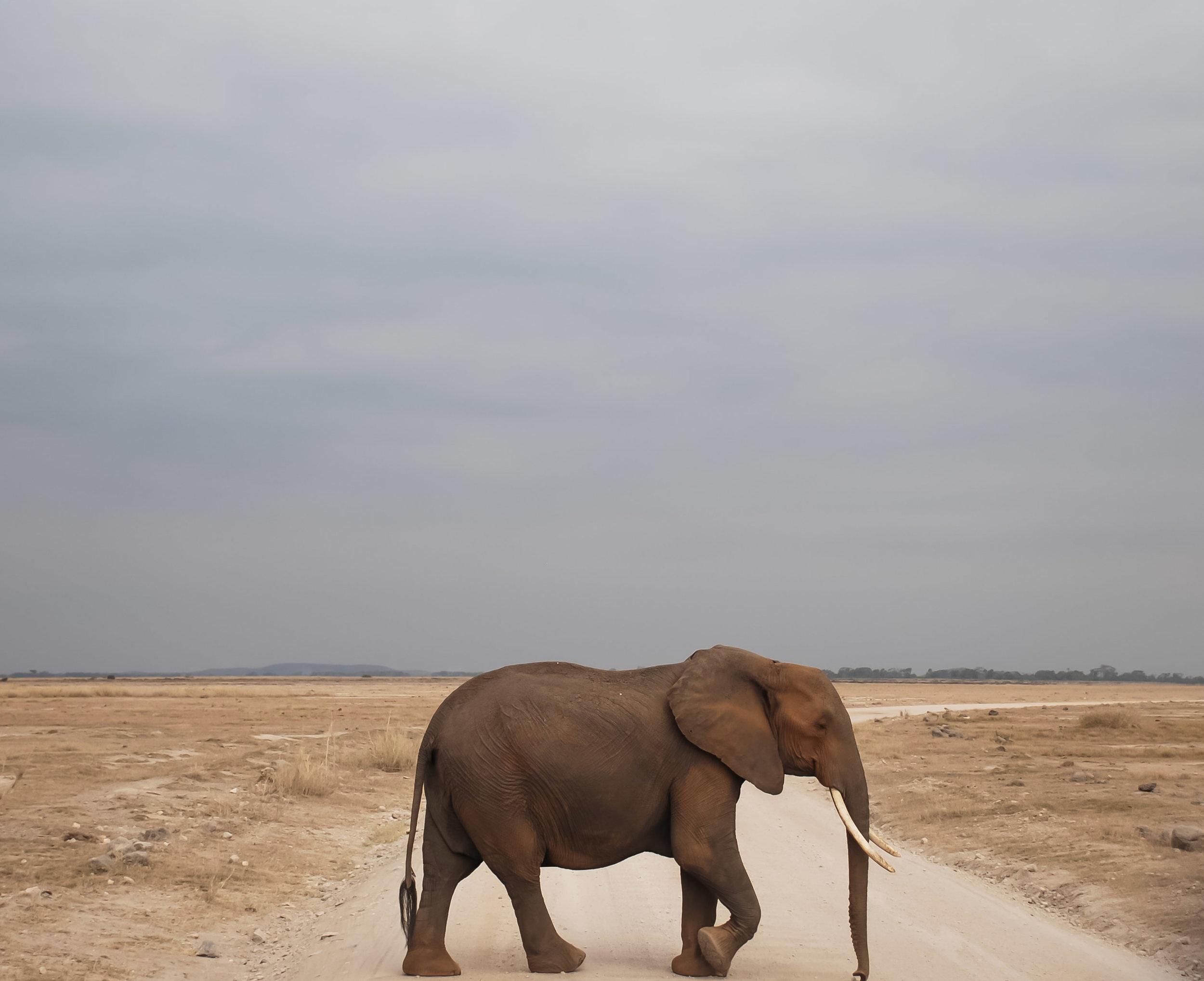 curio.trips.kenya.maasai.mara.elephant.crossing.landscape.jpg