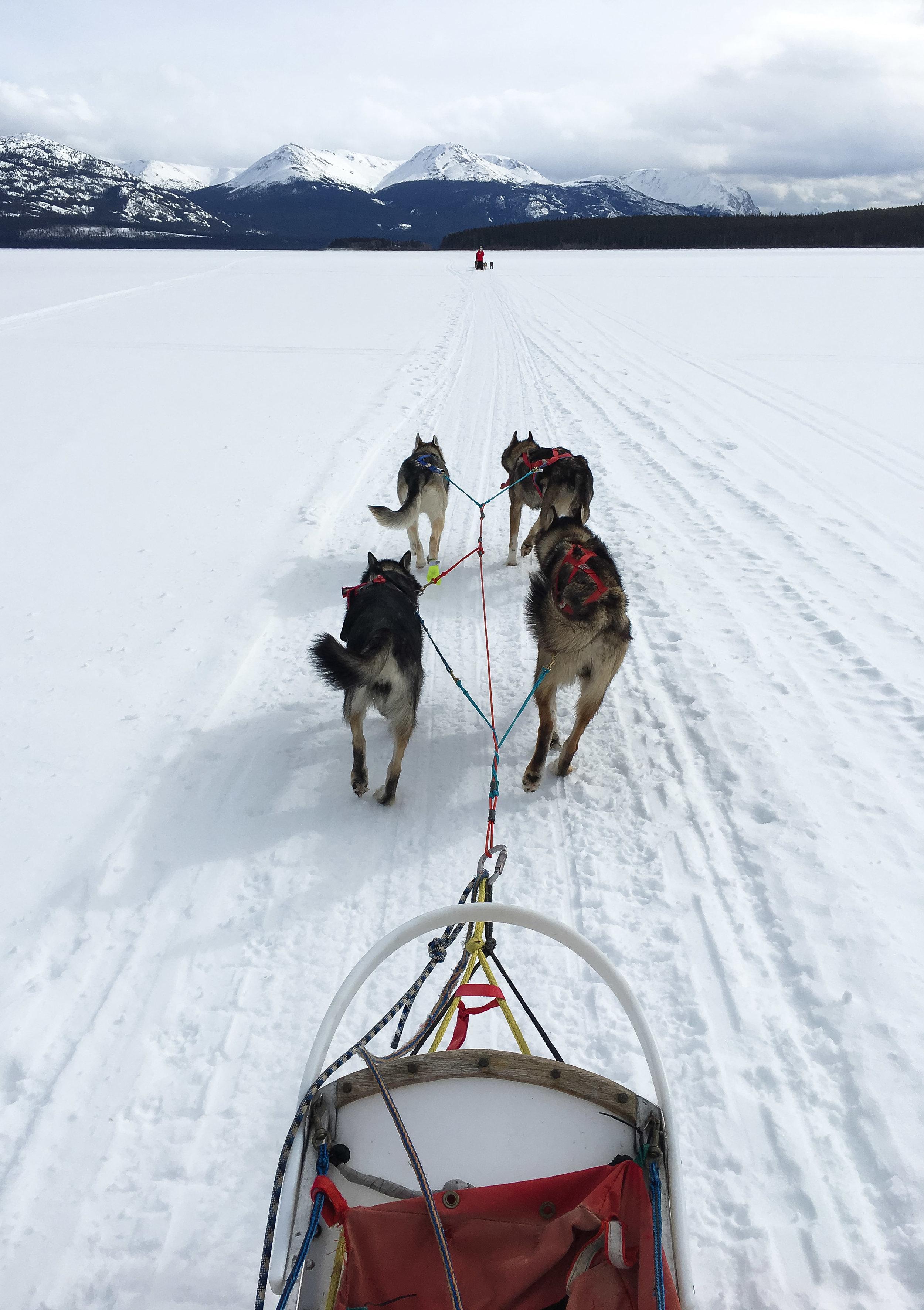 curio.trips.canada.winter.dog.sled.landscape.portrait.jpg