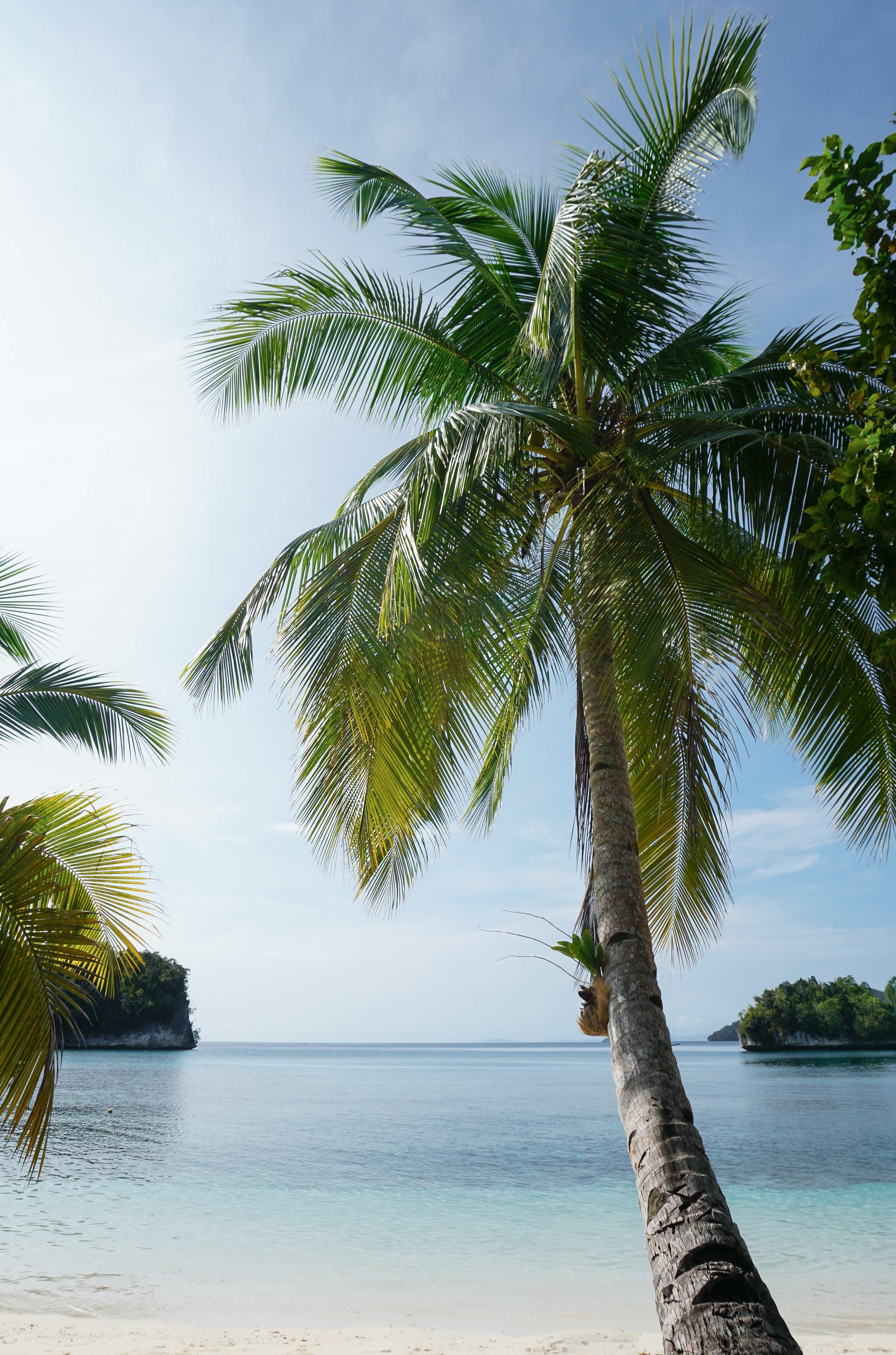 curio.trips.indonesia.raja.ampat.private.island.beach.palm.tree.portrait.jpg
