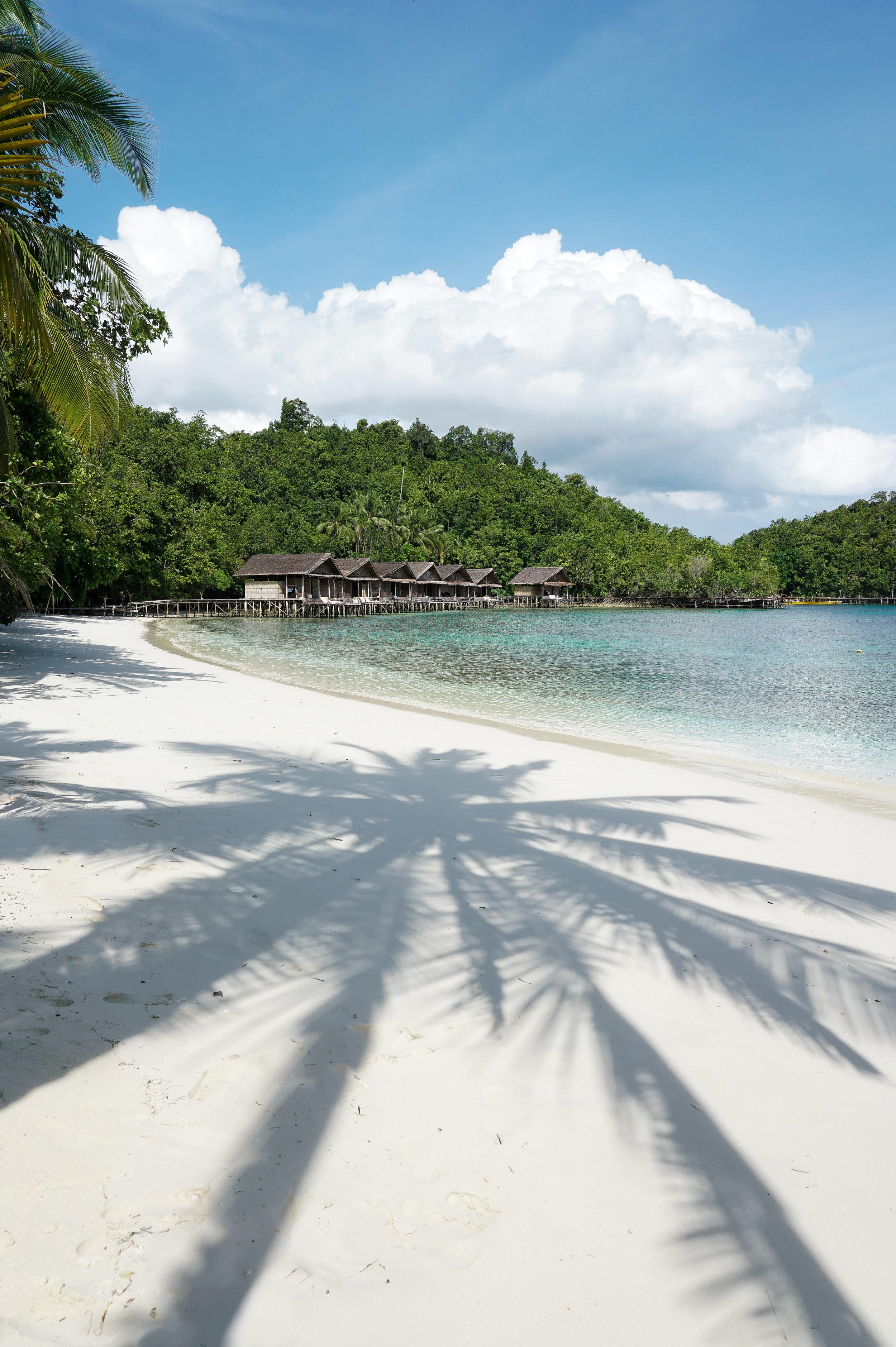 curio.trips.indonesia.raja.ampat.private.island.beach.palm.tree.shadow.portrait.jpg