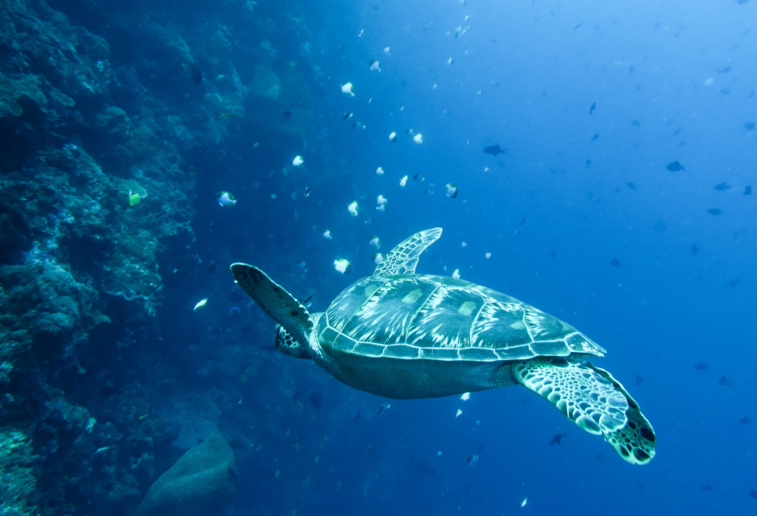 curio.trips.indonesia.diving.turtle.swimming.landscape.jpg