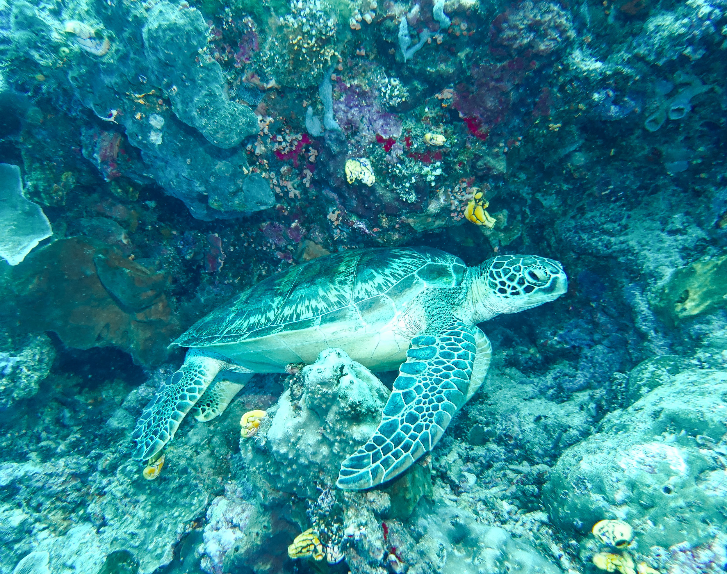 curio.trips.indonesia.diving.turtle.ledge.landscape-3.jpg