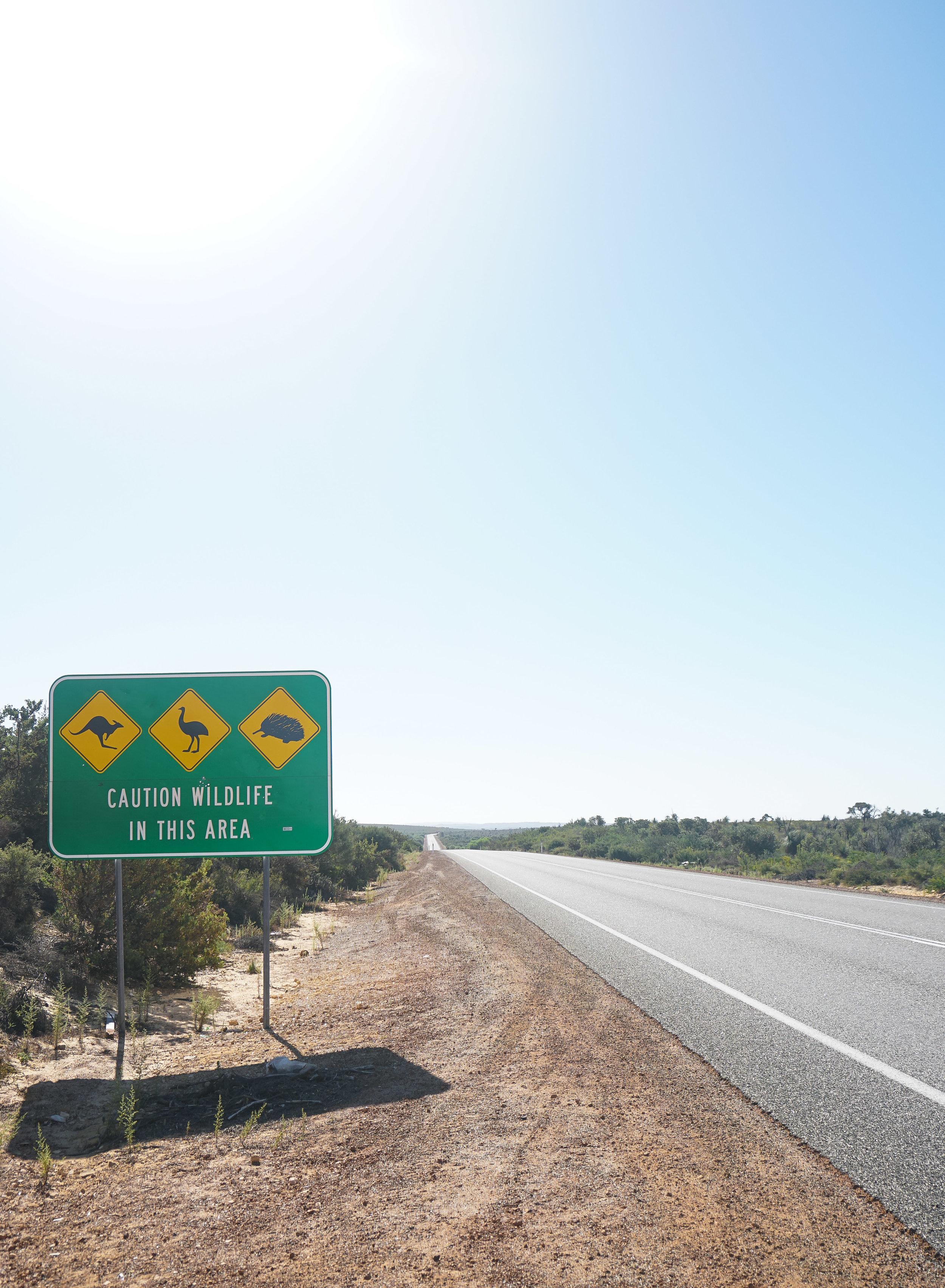 curio.trips.australia.wildlife.sign.road.portrait.jpg