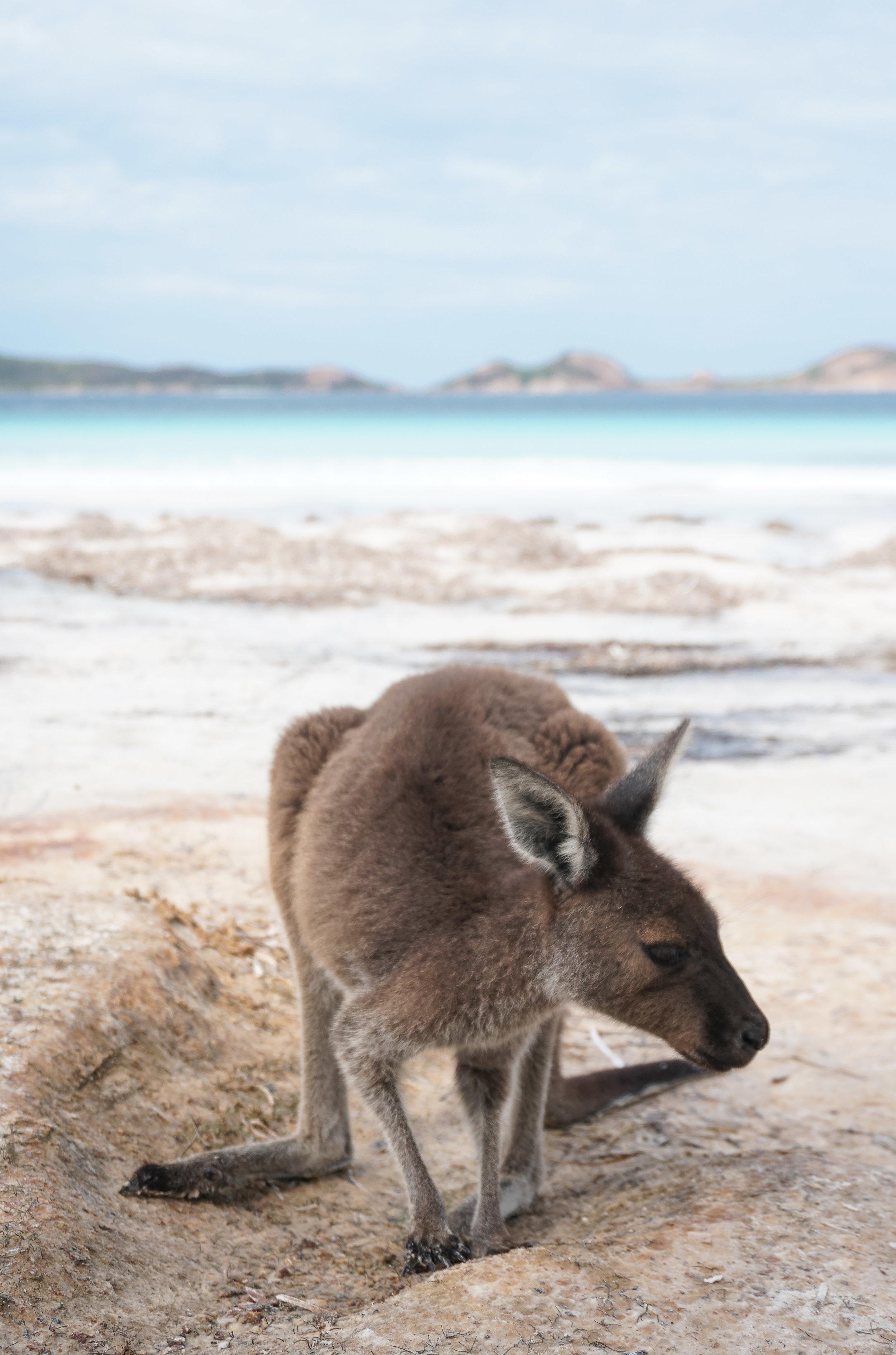 AUSTRALIA, AUSTRALASIA