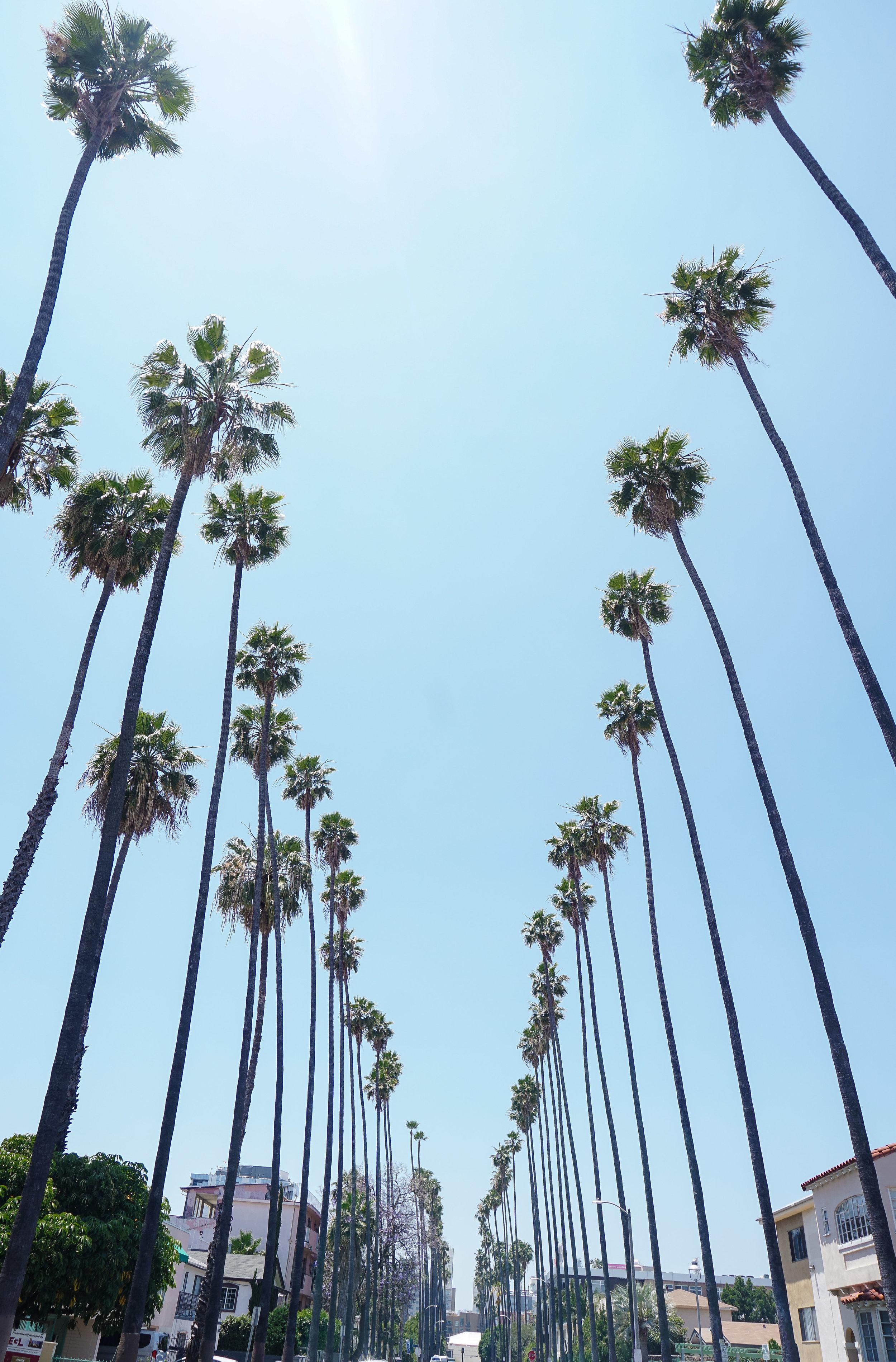 curio.trips.usa.california.los.angeles.palm.tree.street.portrait.jpg