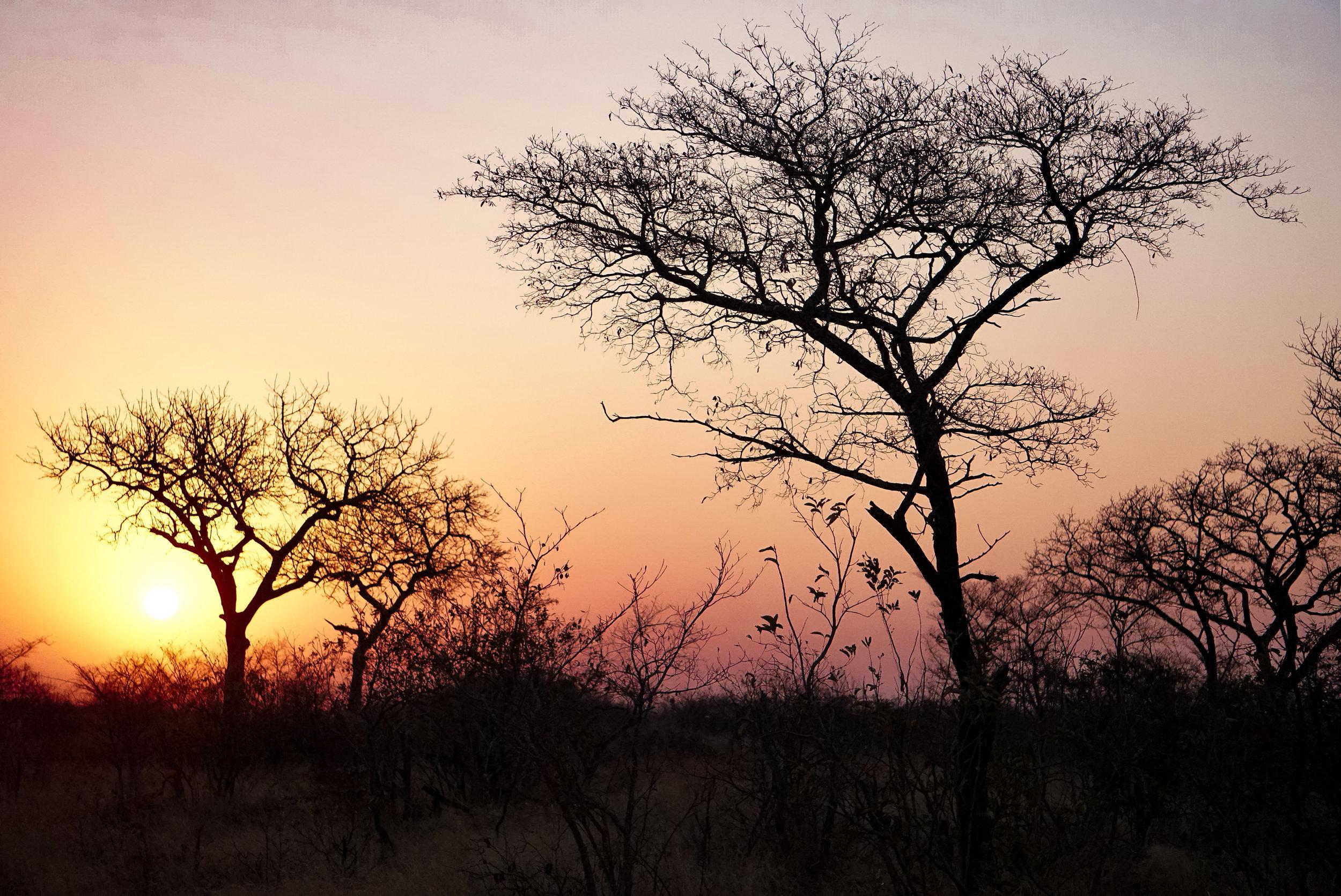 htk.photography.south.africa.safari.trees.sunset.landscape.jpg