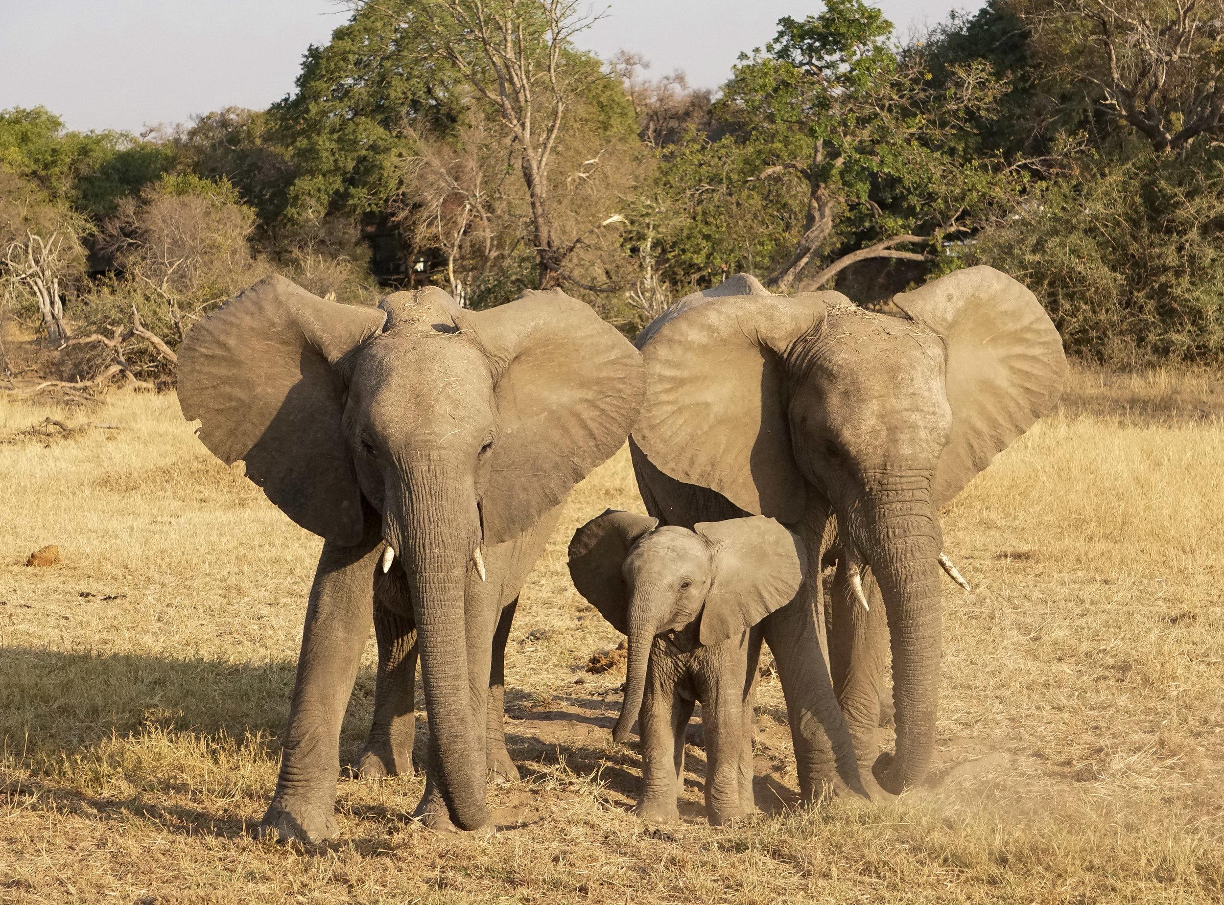 htk.photography.south.africa.safari.elephant.family.landscape.jpg