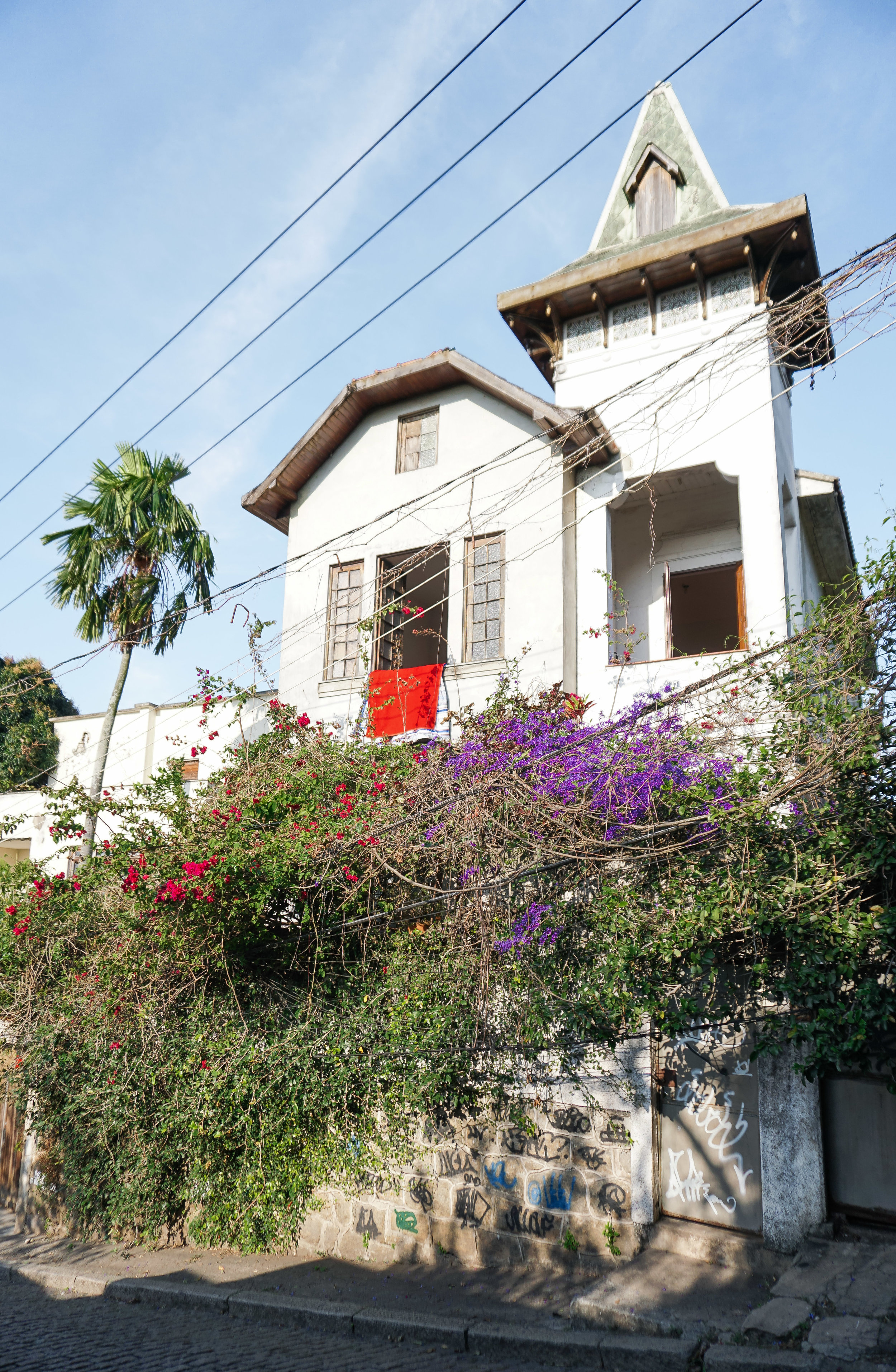 curio.trips.brazil.rio.de.janeiro.white.house.palmtree.portrait.jpg