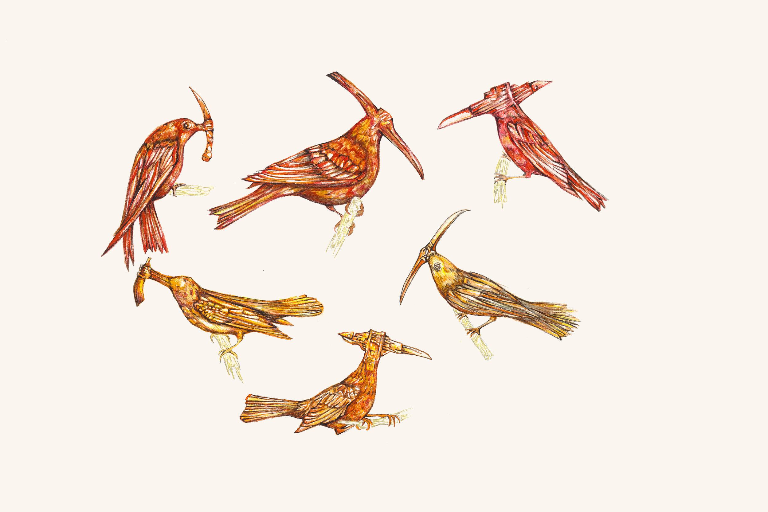 estudos para estampa  pássaros afiados [aquarela]